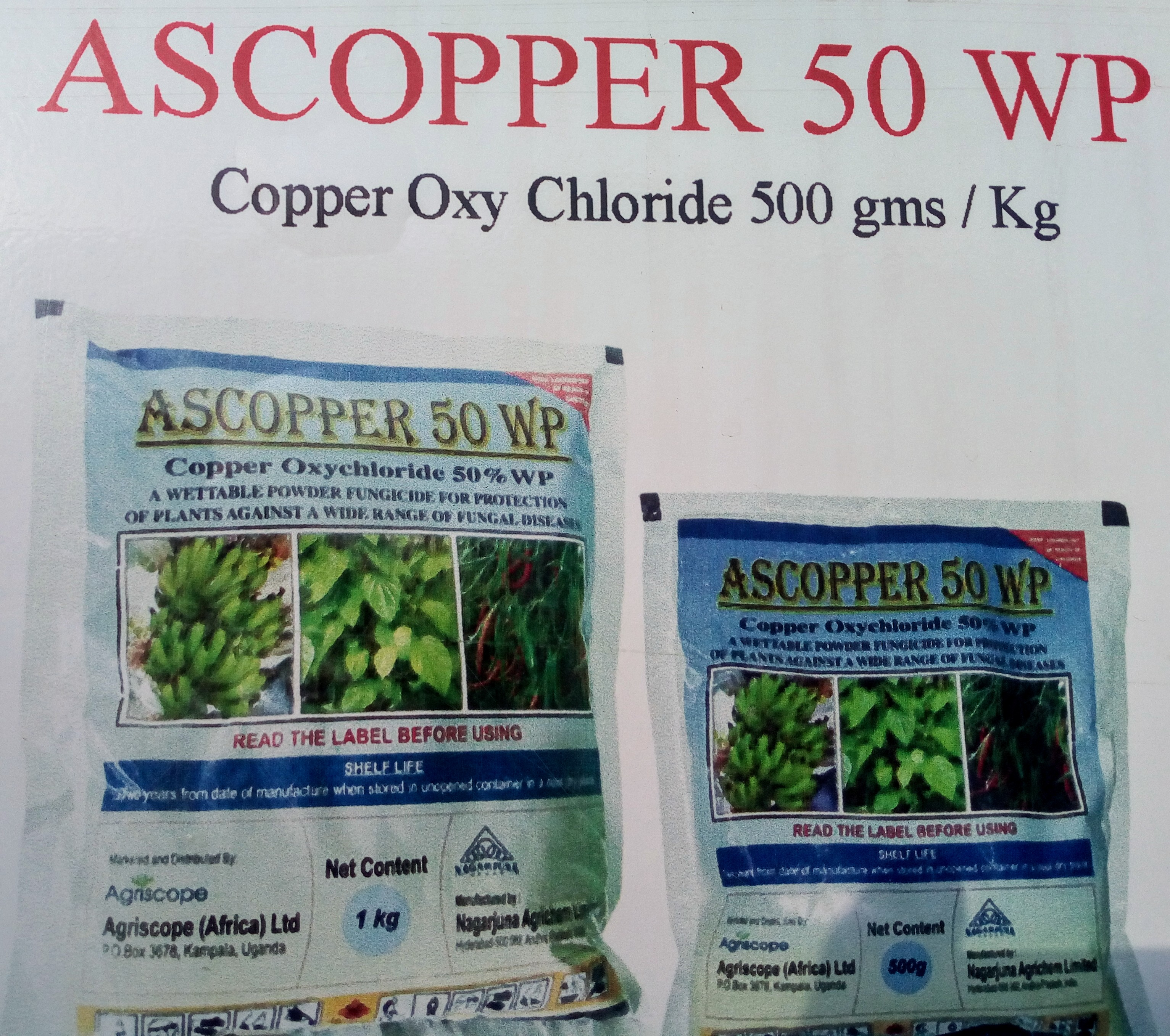 ASCOPPER 50 WP fungicide (500gm)