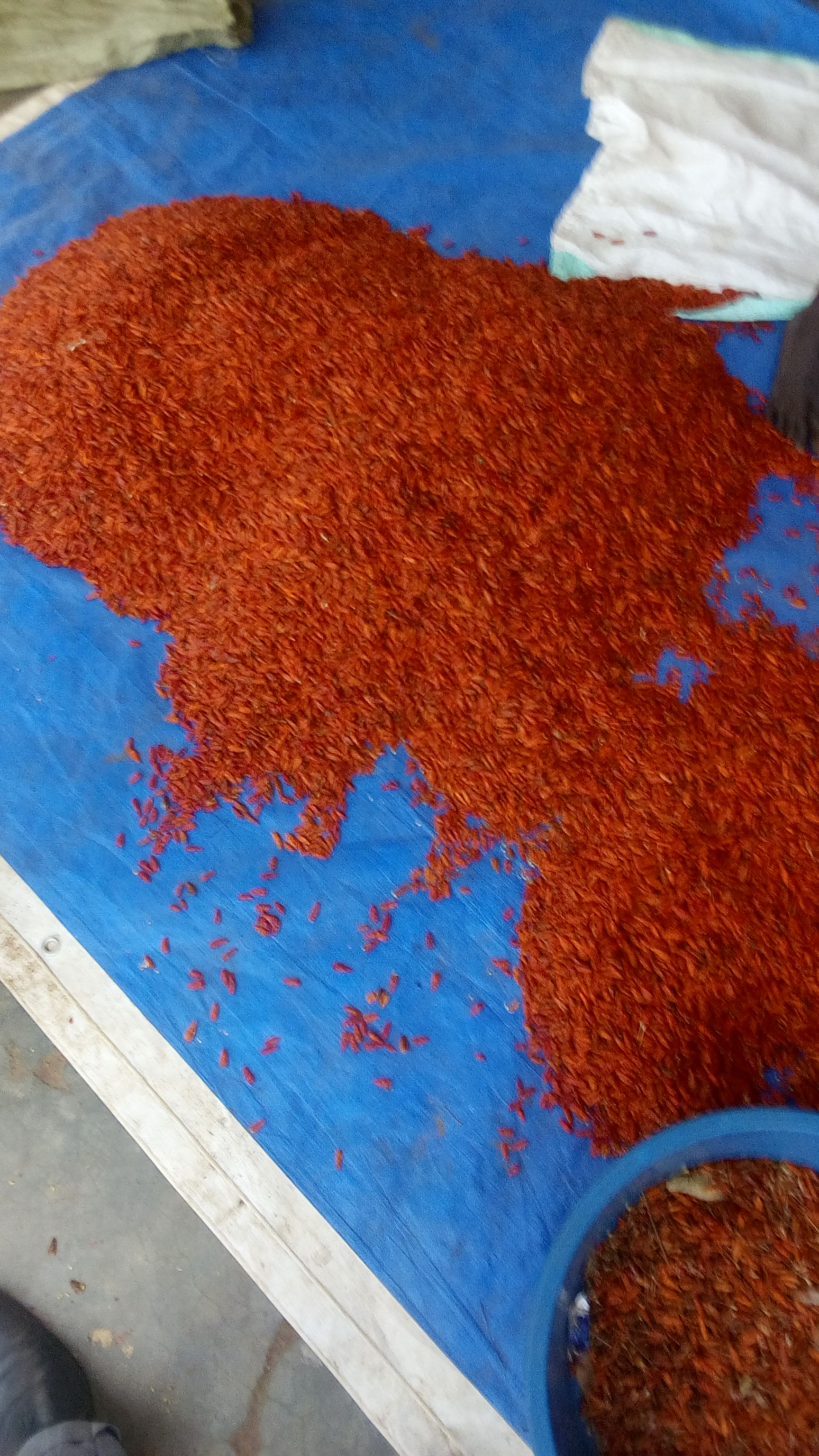 African red bird's eye chili produce (100Kg)