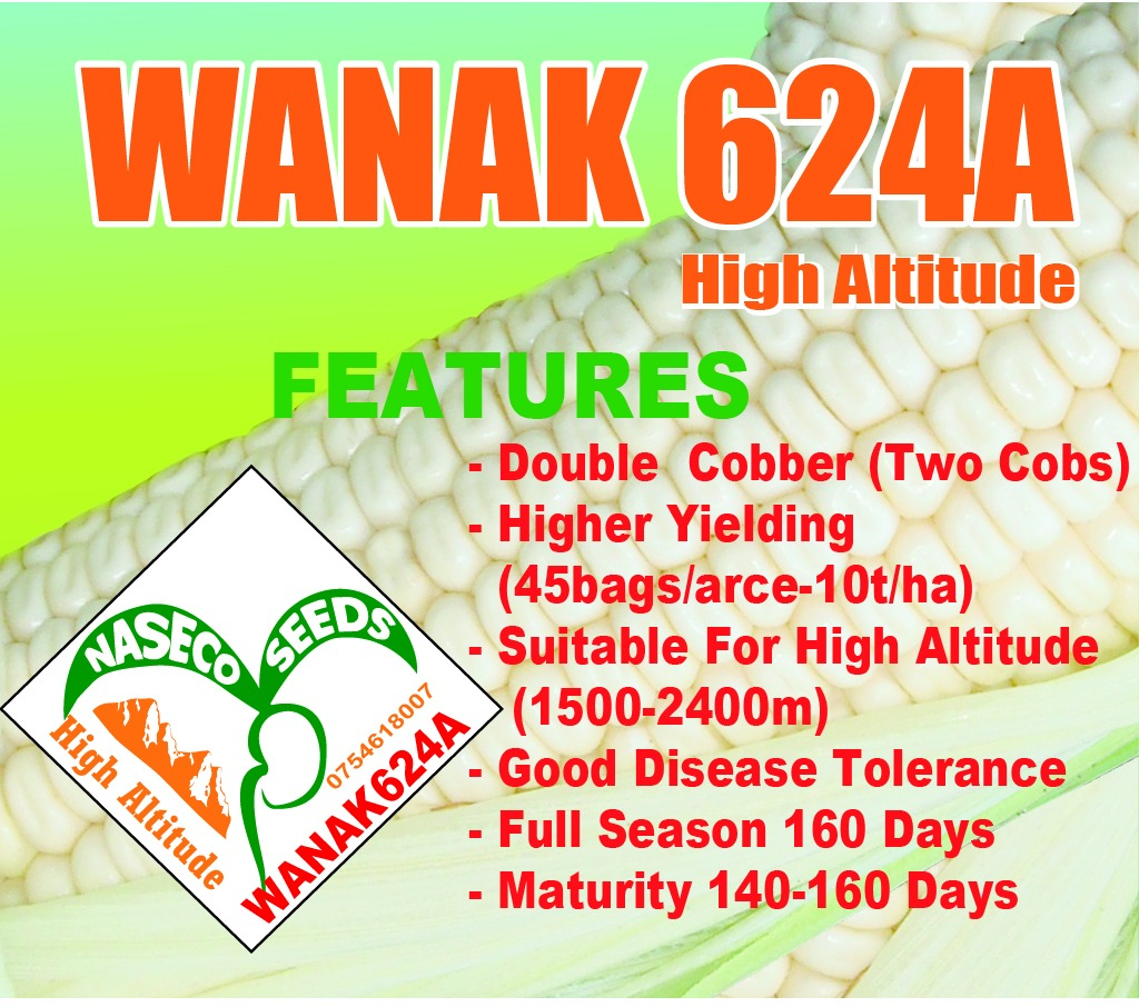 WANAK 624A maize seeds (1Kg)