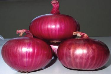Fresh Early Red Max onion produce (1 metric tonne)