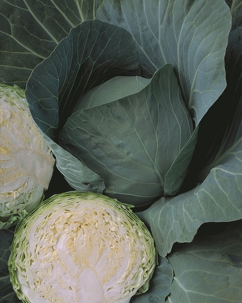 Blue dynasty Cabbage farming package (1 acre)